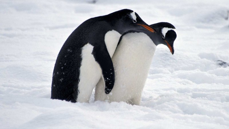 They're Turning The Frickin' Penguins Gay