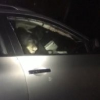 'How does it even happen?': Bear locks itself in car, sets off alarm outside B.C. home