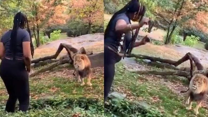 Woman taunts lion after climbing into enclosure at Bronx Zoo