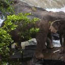 Six elephants die at Thai waterfall after some tried to save calf that fell