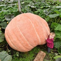 Giant vegetables crop up and win awards