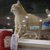 Restaurant Does The Sweetest Thing For Lonely Cat Who Needed A Friend