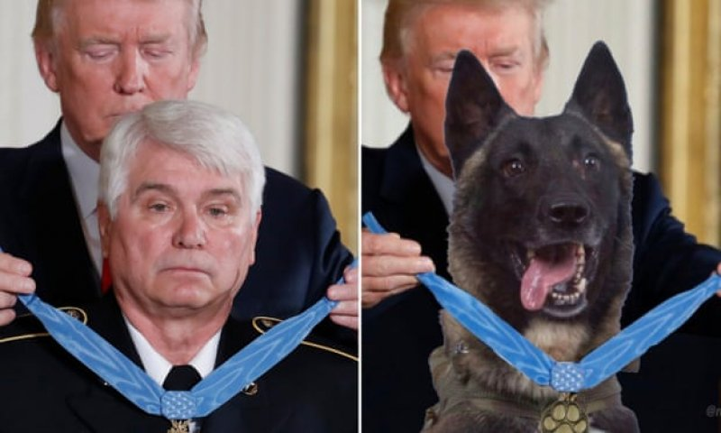 Trump tweets fake photo of dog in recent Isis raid getting medal of honor