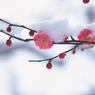 24 Solar Terms: 6 things about Major Snow