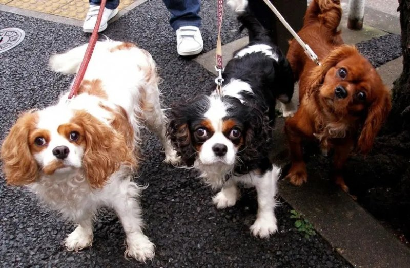 Dogs can count, new study reveals
