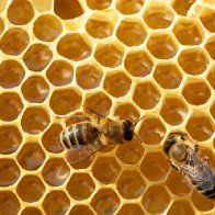 Bees - among most vital creatures on Earth - join endangered species list