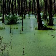 Is It Possible-Voting Our Way Out Of The Swamp?