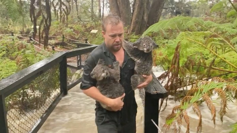 Heavy rain brings flash floods to parts of eastern Australia as bushfires rage on