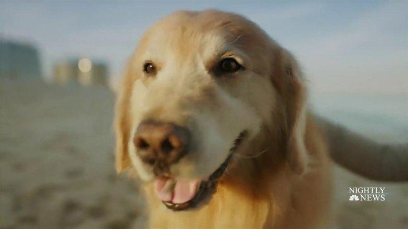 'A very good boy': Cancer survivor dog will promote animal health in $6 million Super Bowl ad