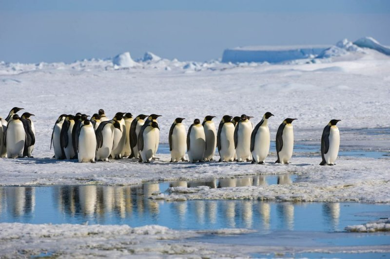 Antarctica registers hottest temperature ever at nearly 65 degrees Fahrenheit