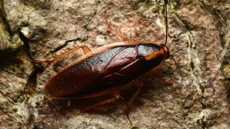 Broken-hearted? Zoos will let you name a cockroach after your ex and watch it get eaten