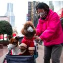 Coronavirus Patient's Pet Dog Tests Positive for 'Low Level' of Virus