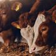 Factory farms and pandemics (Reports)