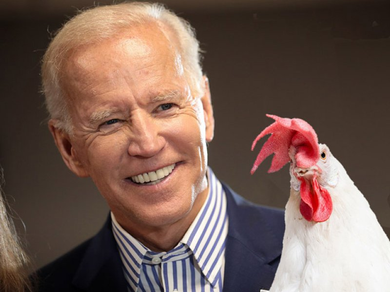 Joe Biden is a Chicken!
