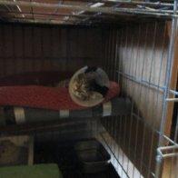 The saga of the feral kitten