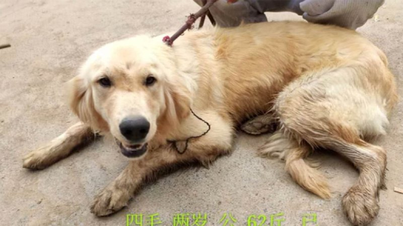 Florida animal rescuers save 20 dogs from Chinese meat market