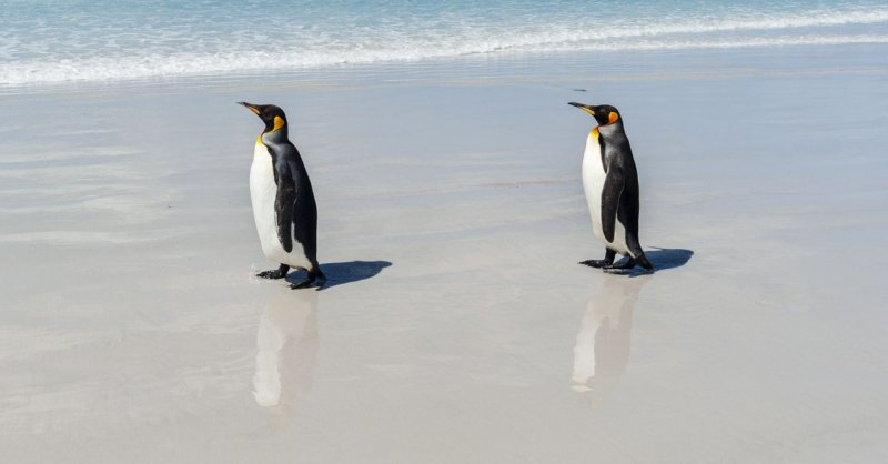 The Mystery of the World's Loneliest Penguins | WIRED