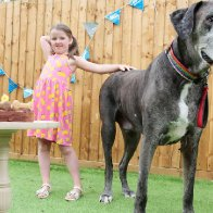 Freddy the Great Dane, the tallest dog in the world, has died