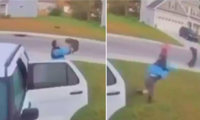Video shows man saving his wife from bobcat by grabbing and hurling it across lawn