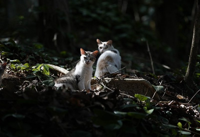 People have abandoned hundreds of cats on a deserted Brazilian island. Officials aren't sure how to save them.