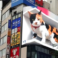 """CFT (""""Critical Feline Theory"""") Pop Quiz: What Sex is the Cat on this billboard?"""