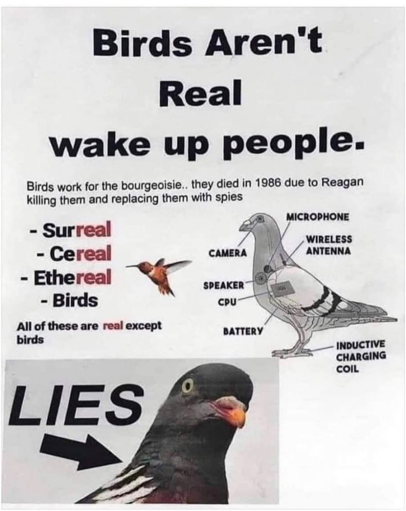 Birds Aren't Real. Movement Says Birds Are Government Drones