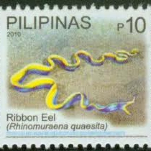stamp-eel-ribbon