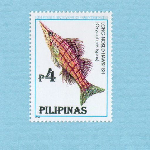 stamp-long-nosed-hawkfish-640x480-019