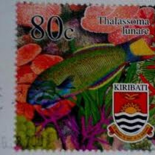 stamp-fish-wrasse-lunare