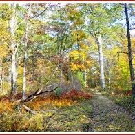 Autumn, Forest Interior, Pocono Mountains, Pennsylvania
