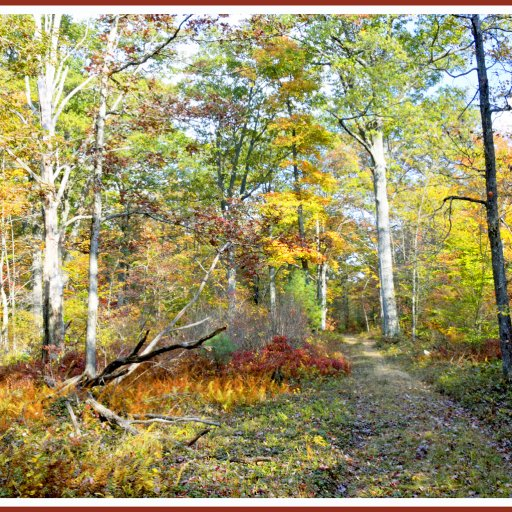 Autumn, Forest Interior, Pocono Mountains, Pennsylvania