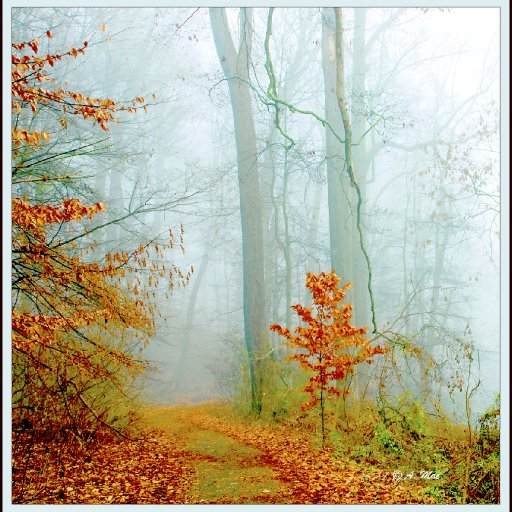 Autumn, Misty Forest Trail, Montgomery, County, Pennsylvania