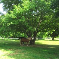 horse-outdoors-IMG_4028-1704x2272-1704x2272
