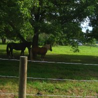 horse-outdoors-IMG_4031-2272x1704-2272x1704