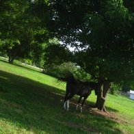 horse-outdoors-IMG_4030-2272x1704-2272x1704
