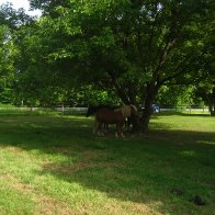 horse-outdoors-IMG_4027-2272x1704-2272x1704