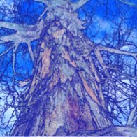 tree-of-life-small-blue