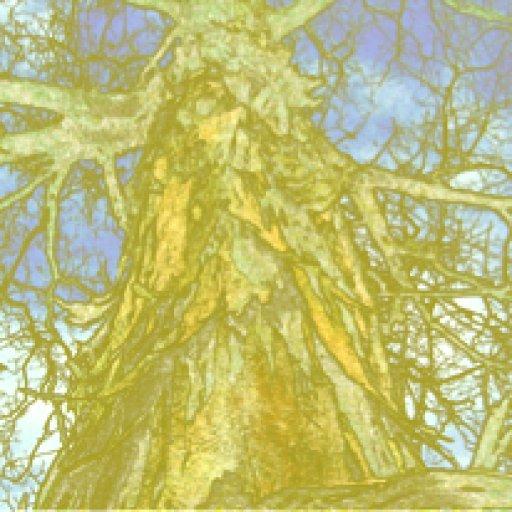 tree-of-life-small-yellow