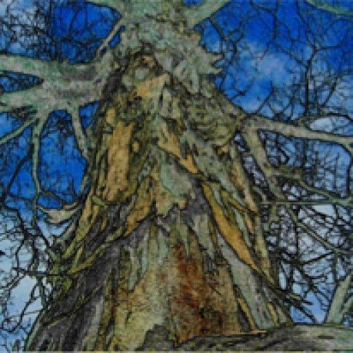 tree-of-life-small