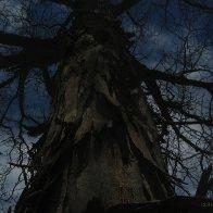 tree-bark-IMG_6906 copy