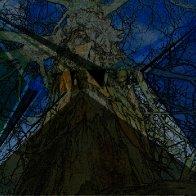 triangular tree of life