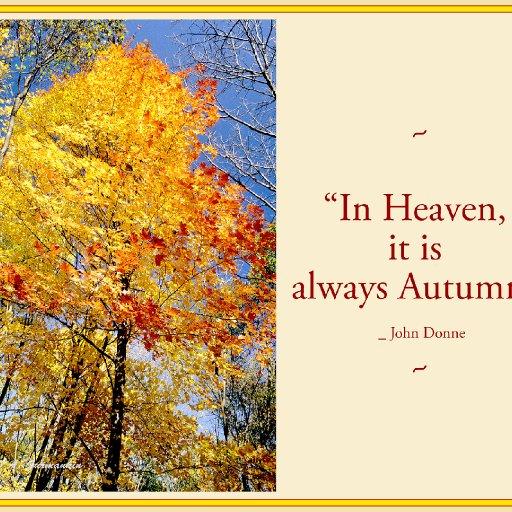 NT_autumncanopy1