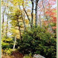 NT_autumnforestint13
