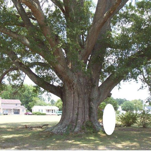 Roseboro Tree