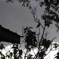 Hummer at dusk