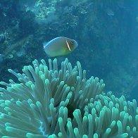 a-fish 1.jpg