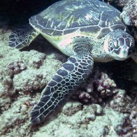 Turtle1.JPG.jpg