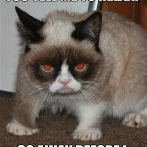 grumpy-cat-funny-pictures3