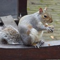 Eastern_Grey_Squirrel_in_Bunhill_Fields.jpg