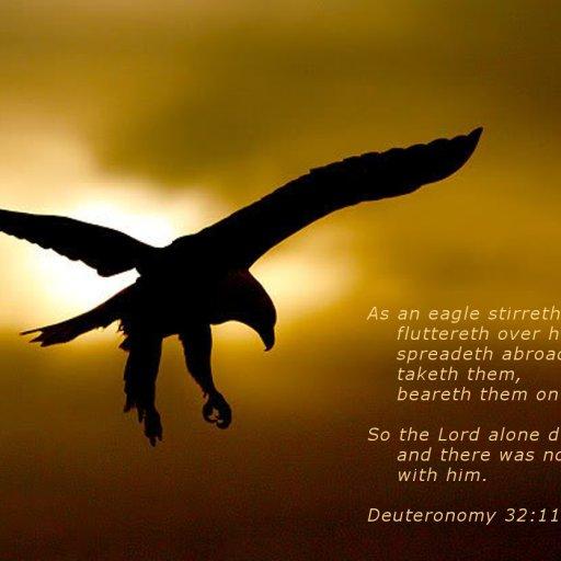 Inspiration soaring eagle